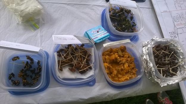Cicada food